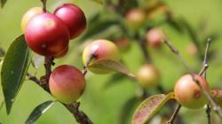 AJE y Gobierno británico ampliarán proyecto de bebidas de la selva peruana