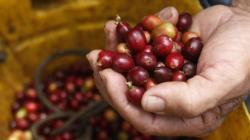 Bloqueos de carreteras paralizan exportaciones de café colombiano