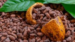 Países Bajos, Indonesia y Bélgica concentraron el 51.9% de las exportaciones peruanas de cacao